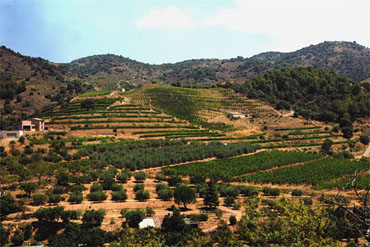 Priorat vineyards