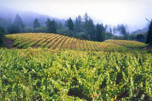 Cyprus vineyards